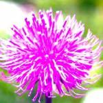 cropped-n_B_fiore-lilla_pic.jpg